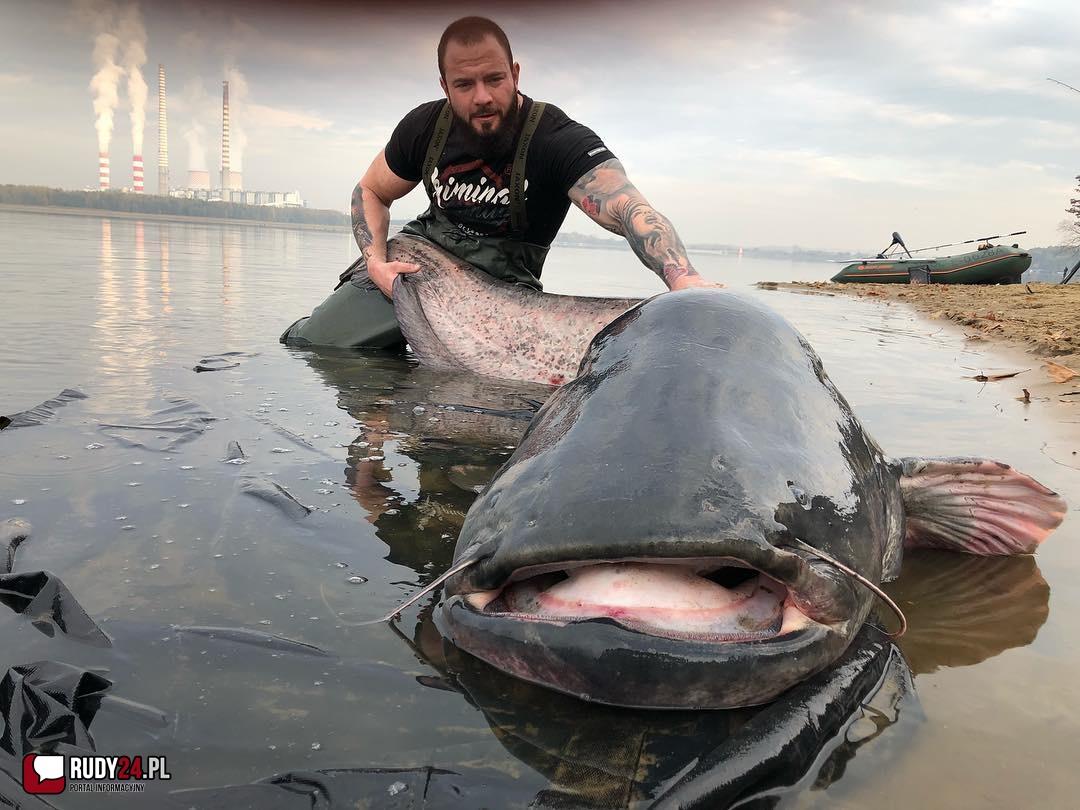 Ogromny sum w zalewie rybnickim! (wideo)