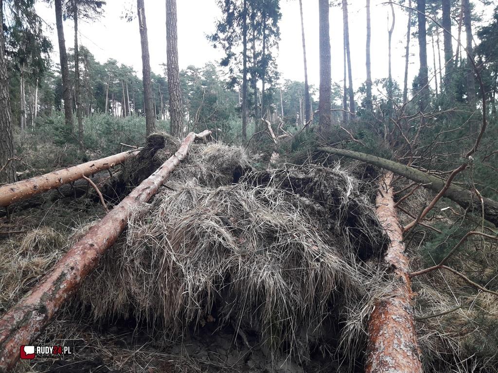 Okresowy zakaz wstępu do lasu