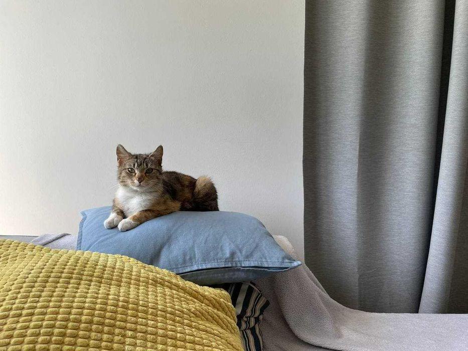 Zaginęła roczna kotka- (Zaginiony kotek odnaleziony)