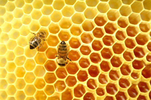 Uwaga pszczelarze!