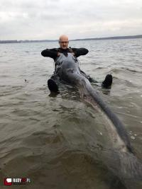 Kolejny ogromny sum w zalewie rybnickim!