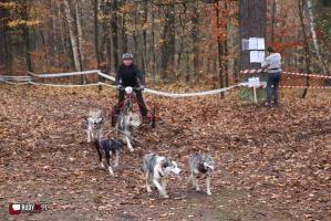 Widowiskowe zawody psich zaprzęgów w Rudach