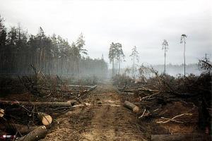 29 lat po pożarze lasów w Kuźni Raciborskiej